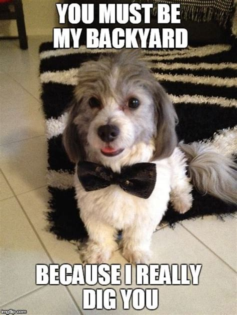 Puppy Meme - sunny dig s it dog animal pet cute fluffy adoable meme funny work lol humor