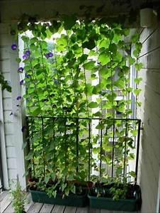 Balkon Sichtschutz Pflanzen : sichtschutz f r terrasse und balkon drau en versteckt sitzen ~ Indierocktalk.com Haus und Dekorationen