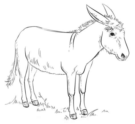 images  bible balaam donkey  pinterest