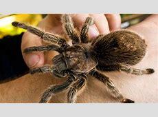 Blumenverkäuferin von großer Spinne gebissen Welt