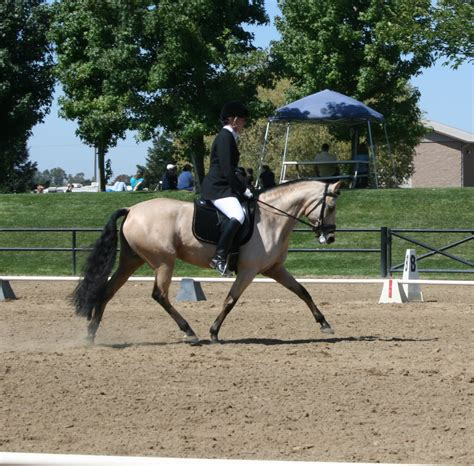 arabian andalusians lusitano offspring test andalusian horse dec saphiro posted