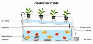Aquaponics Diy  How To Build An Aquaponic System