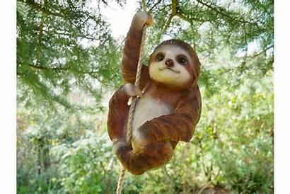 Sloth Climbing Steve Discount Lovers Animal Sn