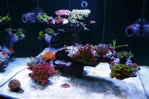Aquascape Reef by Aquascaping Is Aquascaping Forum Nano Reef