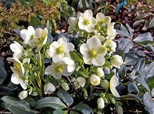Fleur D Hiver Pour Jardinière : quelles plantes et fleurs pour un jardin d hiver fleuri ~ Dailycaller-alerts.com Idées de Décoration
