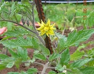 Feuille De Tomate : les feuilles semences ~ Melissatoandfro.com Idées de Décoration