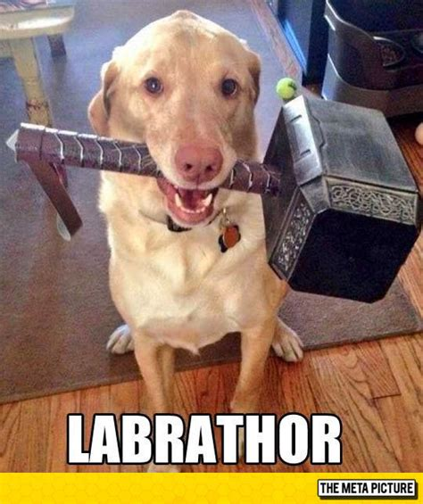 thor 39 s pet the meta picture