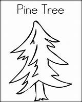 Pine Tree Coloring Pages Line Drawing Trees Outline Drawn Chicka Boom Child Getdrawings Twistynoodle Noodle sketch template