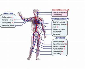 2  Map Of Regions Throughout The Body Where Vascular