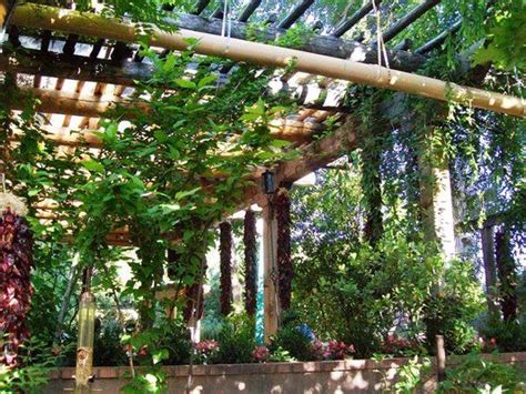 pergola vines patio dining under a chile and vine covered pergola gardening ideas pinterest covered