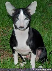 Thursday 13: Cat-Dog Hybrids - Catster