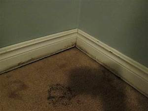 Bloombety : What Kills Mold With Carpet Flooring What ...