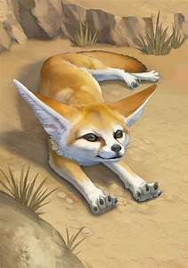 Fennec Fox  Photo