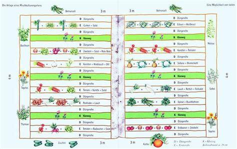 welche kräuter kann ich zusammen pflanzen welche pflanzen vertragen sich tabelle welche kr uter