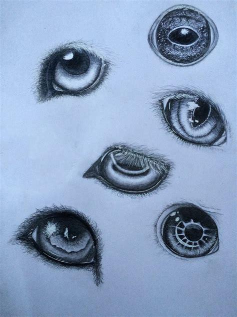 animal eyes  dolugecat  deviantart