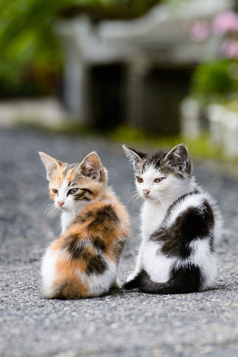 cute cat iphone wallpaper wallpapersafari