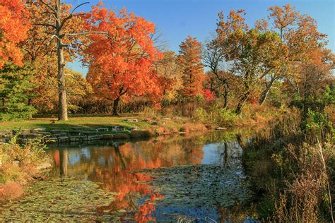 Autumn At The Deer Lake Creek In Forest Park St Louis