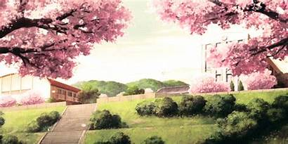 Anime Cherry Blossom Sakura Manga Blossoms Scenery