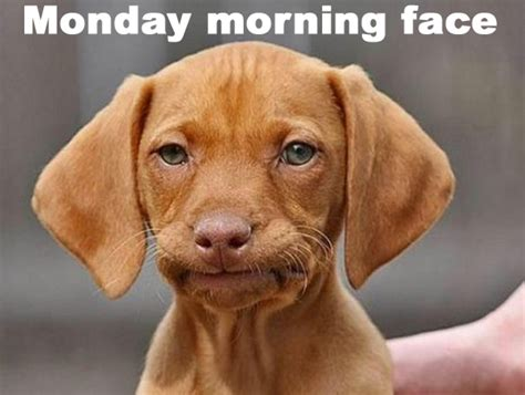 Monday Morning Memes - 11 thoughts we all have on a monday morning woman s own