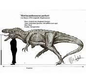 Metriacanthosaurus Parkeri By Teratophoneus On DeviantArt