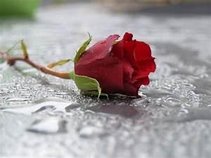 Trauer Blumen Bilder : mit hypnose trauer in zukunft verwandeln trauer ist endlich ~ Frokenaadalensverden.com Haus und Dekorationen