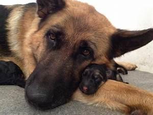 25 Fotograf U00edas De Perros Parecidos A Sus Cachorros