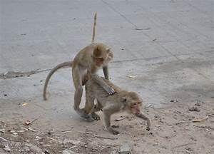 Lopburi Monkey Town in Thailand and Travel from Bangkok