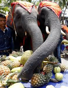We're going to need A LOT more food! 52 Thai elephants ...