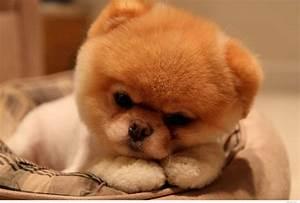 Cute Baby Dog Wallpaper - WallpaperSafari