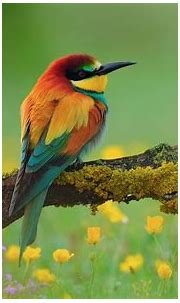 Kingfisher Wallpapers HD Backgrounds, Images, Pics, Photos ...