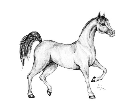 cavalli disegno libero