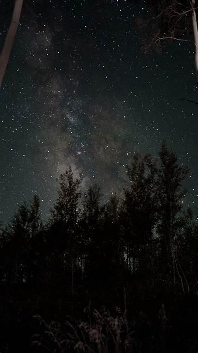 Sky Starry Night Stars Trees Phone Wallpapers
