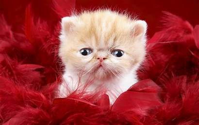 Funny Wallpapers Cats Animals Cat Backgrounds Animal
