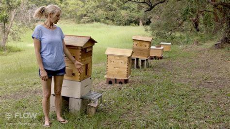 Backyard Beehive Honey Harvest Starter Kit-the Best Bee