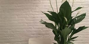 Plantes D39intrieur Et Plantes Vertes Entretien Culture
