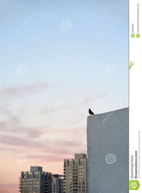 small bird standing   building ledge stock image
