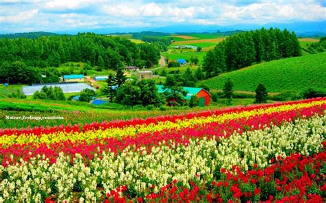 Wallpapers Of Natural Scene  Hd Wallpapers Pulse