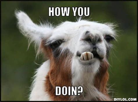 Llama Birthday Meme - 25 best ideas about funny llama on pinterest pics of llamas alpaca funny and llamas