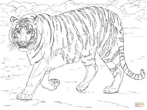 Kleurplaat Tijgerkop by Desenho De Tigre De Bengala Para Colorir Desenhos Para