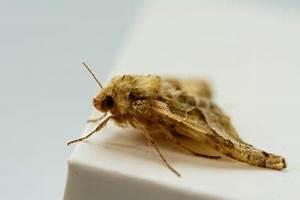 Fruchtfliegen Im Bad : kategorie ungeziefer ~ Lizthompson.info Haus und Dekorationen