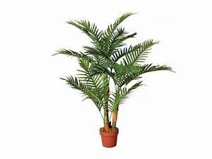 Palmera Plant 120 Cm — Garden Jardinitis