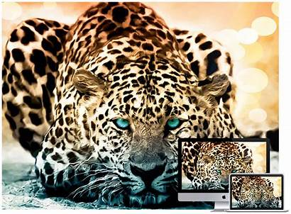 Wallpapers Animal Wildlife Animals Amazing Wild Backgrounds