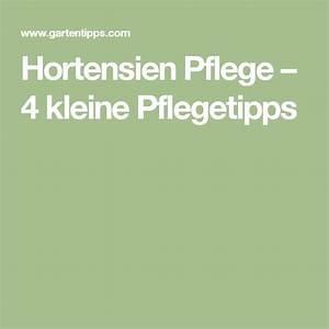 Hortensien Pflege Balkon : die besten 25 hortensien pflege ideen auf pinterest ~ Lizthompson.info Haus und Dekorationen