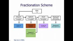 Soil Phosphorus Fractionation Procedures