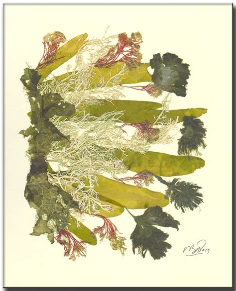 seaweed paper uni fmp by alisslucy 289 other ideas to discover on pinterest wool ernst haeckel and mermaids