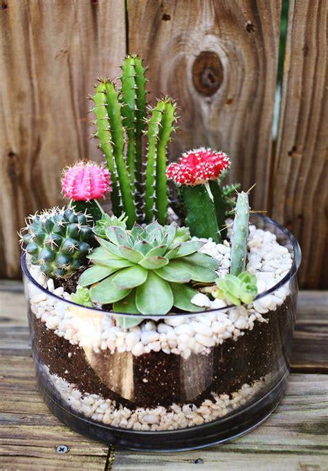 แบ่งปันไอเดีย DIY 'สวนแคคตัสในโหลแก้ว' จัดสวนเล็กๆ สุดชิค ตามแบบฉบับฮิปสเตอร์ - NaiBann.com