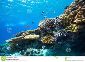 Beautiful Underwater Fish Coral Reef