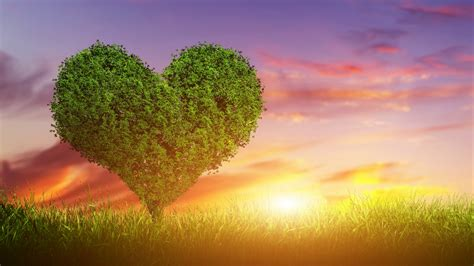 image stock images love image heart tree 5k stock images 14863