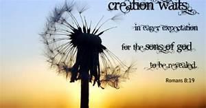 Romans 8:19 | L... Roman Quotable Quotes