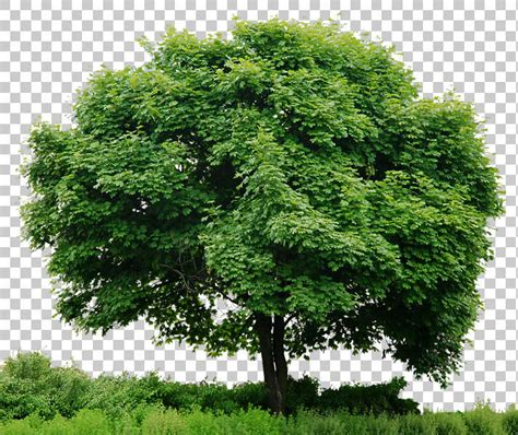 Tree Wallpaper Png by Trees0043 Free Background Texture Tree Leaves Alpha